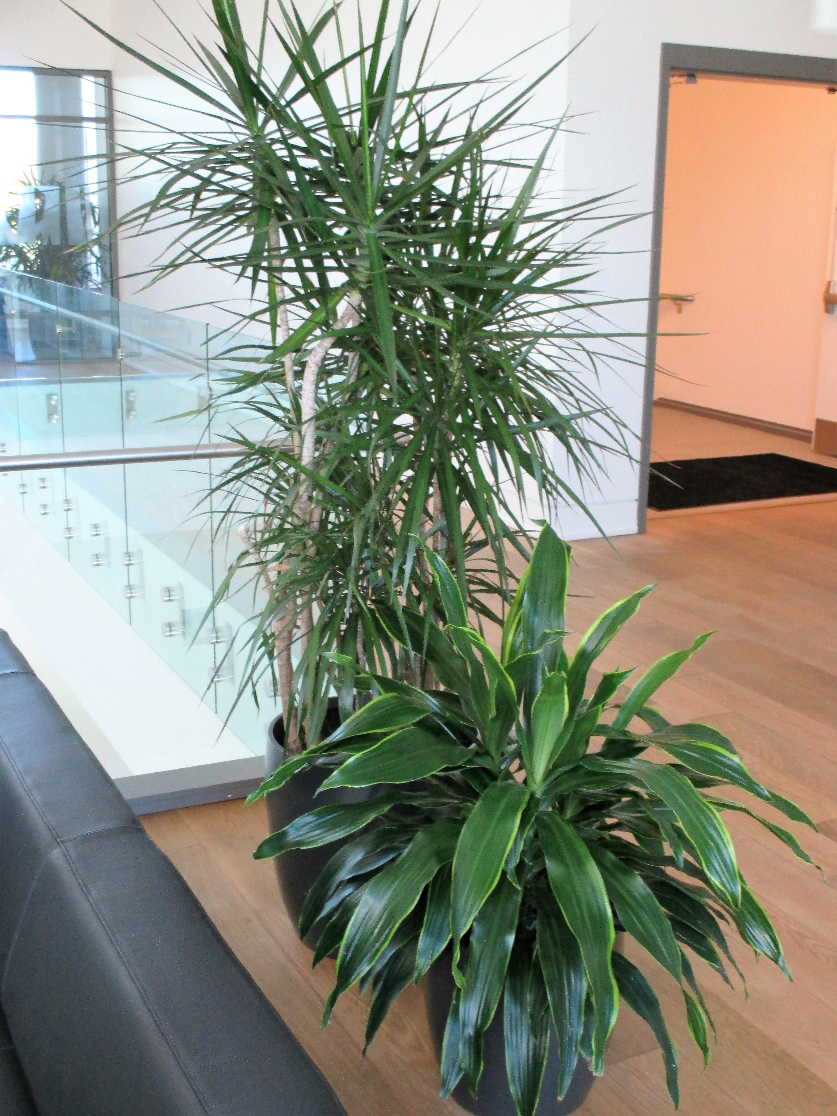 Plantscapes Interior Plant Design Wilmington North Carolina Foliage Design Of The Carolinas