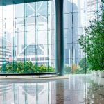 Applying the Biophilia Hypothesis to Your Workplace